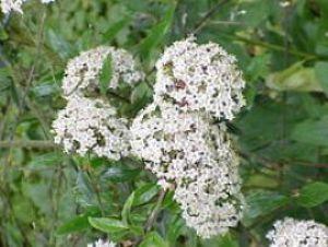 Orto botanico for Nomi di fiori bianchi
